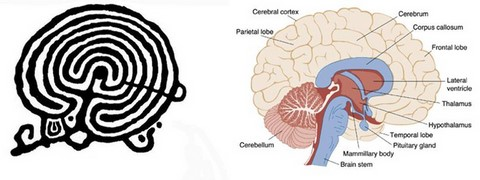 labyrinth and human brain